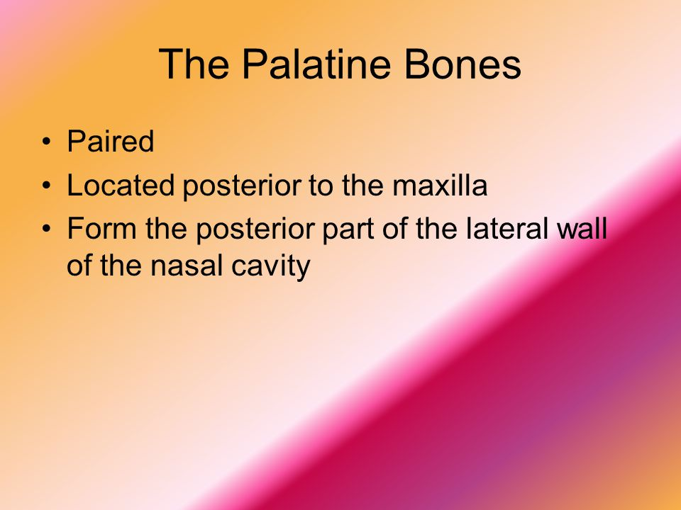 The Palatine Bones Paired Located posterior to the maxilla