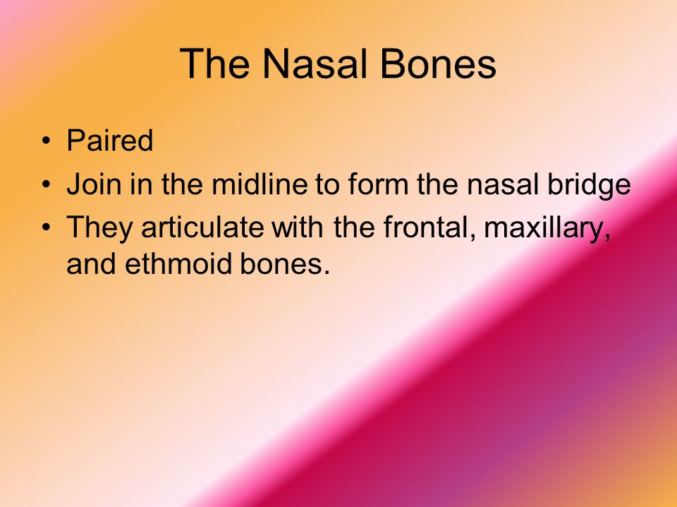 The Nasal Bones Paired Join in the midline to form the nasal bridge