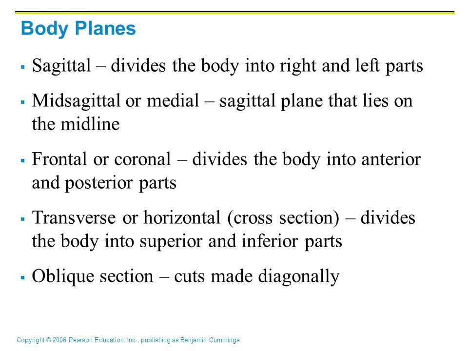 Body Planes Sagittal – divides the body into right and left parts. Midsagittal or medial – sagittal plane that lies on the midline.