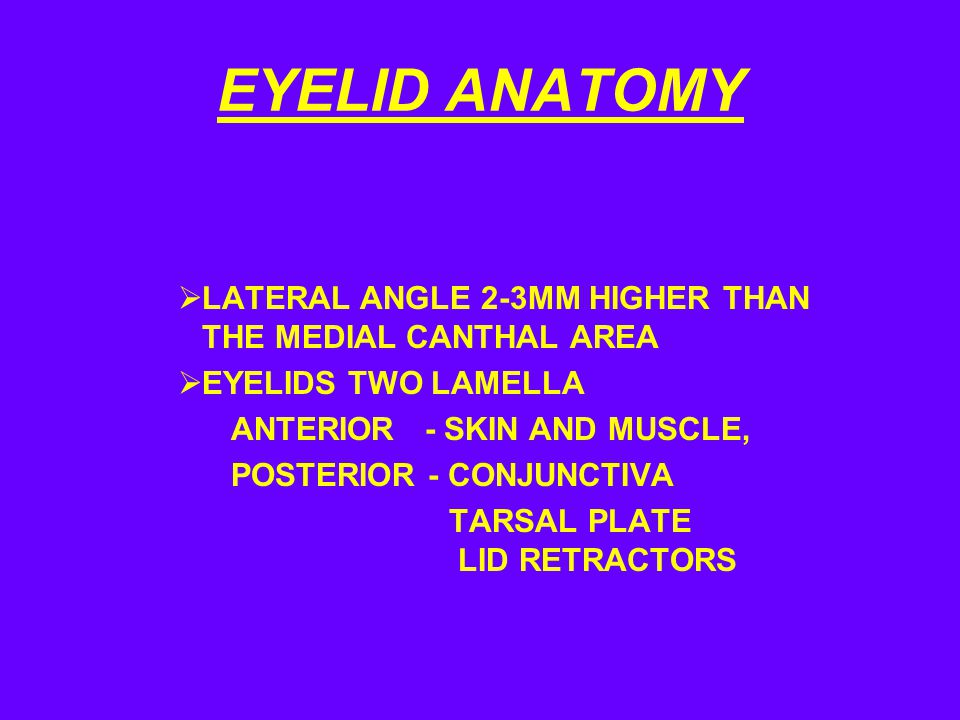 EYELID ANATOMY LATERAL ANGLE 2-3MM HIGHER THAN THE MEDIAL CANTHAL AREA