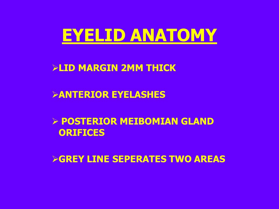 EYELID ANATOMY LID MARGIN 2MM THICK ANTERIOR EYELASHES