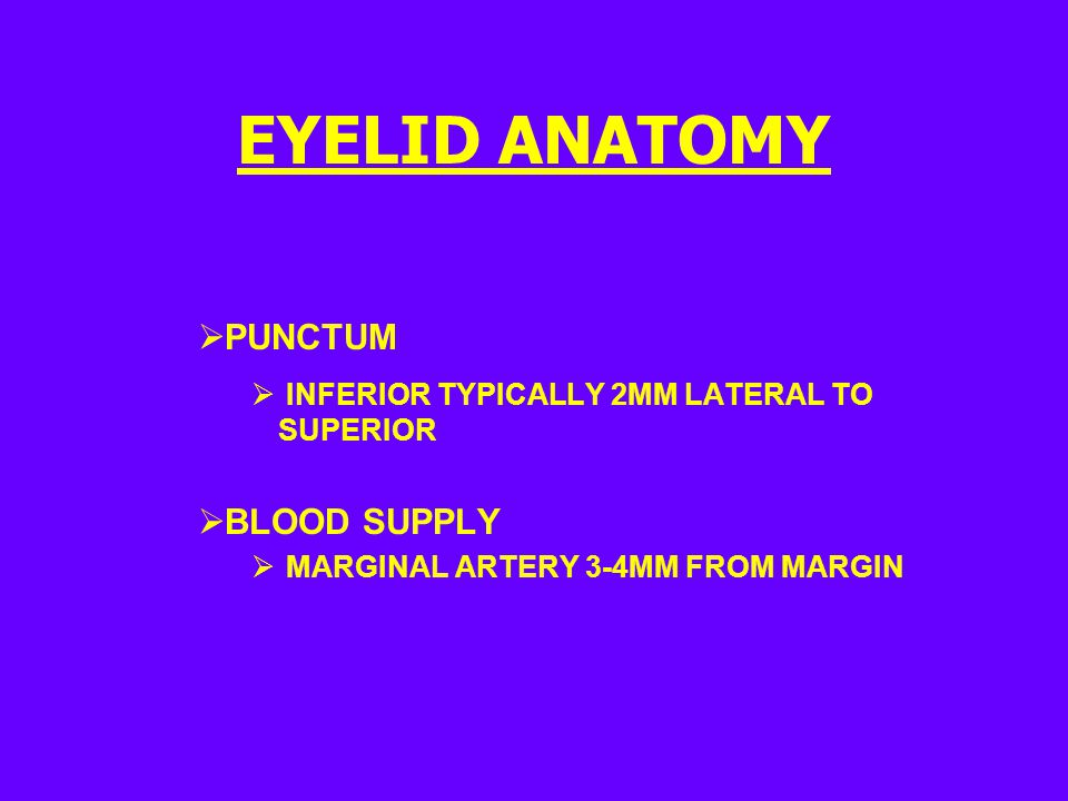 EYELID ANATOMY PUNCTUM BLOOD SUPPLY