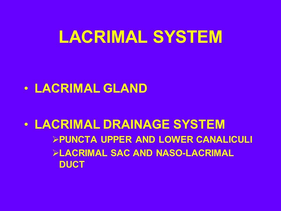 LACRIMAL SYSTEM LACRIMAL GLAND LACRIMAL DRAINAGE SYSTEM