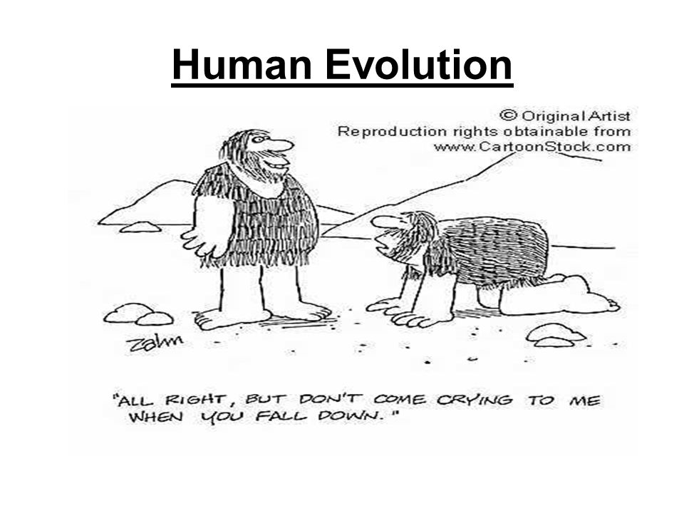 humans versus apes how are humans unique primates How smart are dogs these neurons respond both when a particular action is humans versus apes how are humans unique primates.