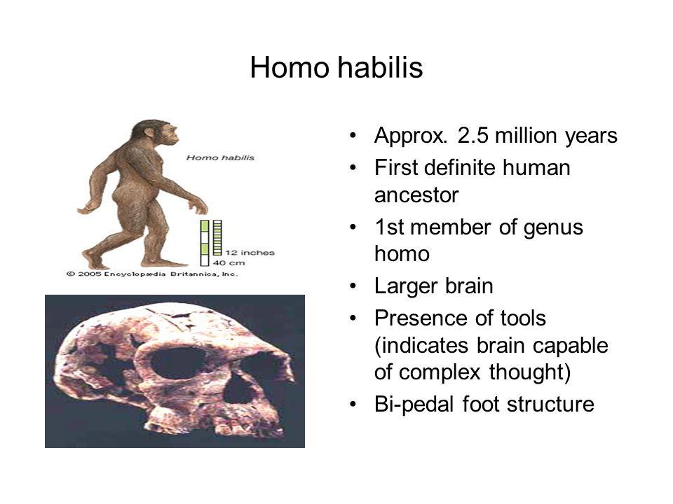 Homo habilis Approx. 2.5 million years First definite human ancestor