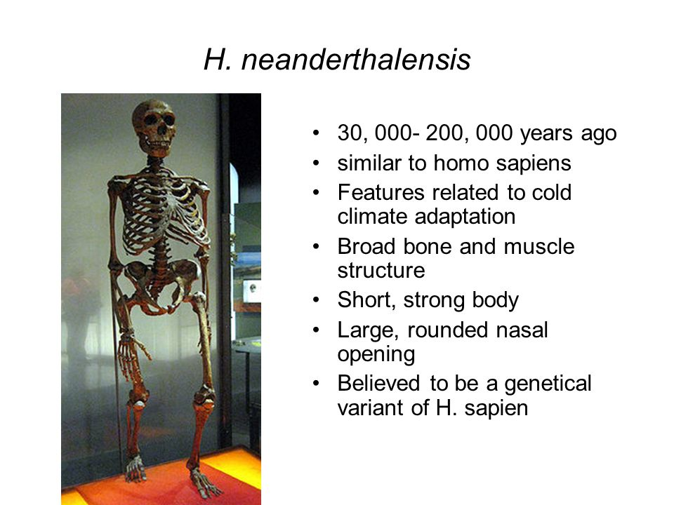 H. neanderthalensis 30, 000- 200, 000 years ago