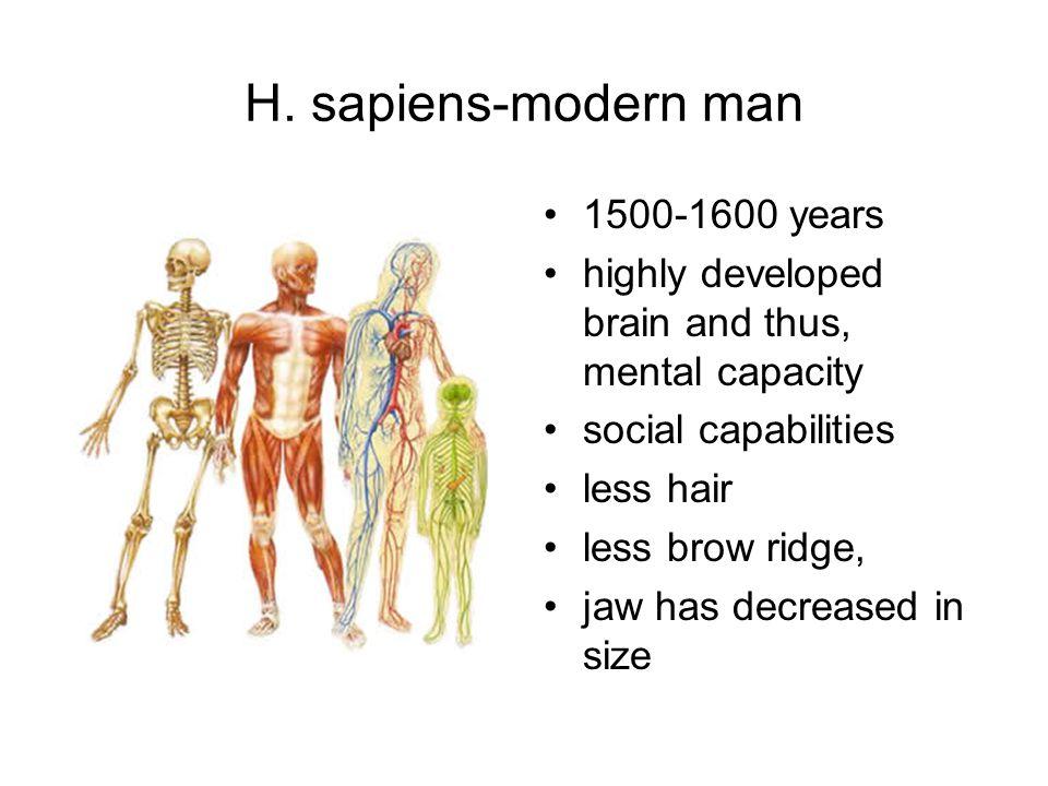 H. sapiens-modern man 1500-1600 years
