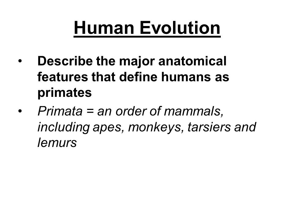 Human Evolution Describe the major anatomical features that define humans as primates.