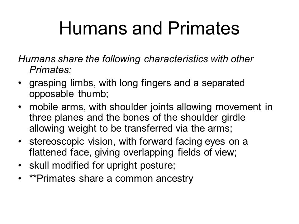 Humans and Primates Humans share the following characteristics with other Primates: