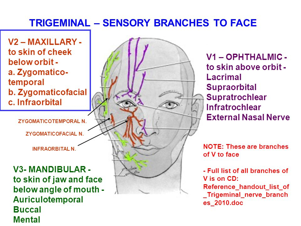Zygomaticofacial Nerve BRANCHES OF THE...