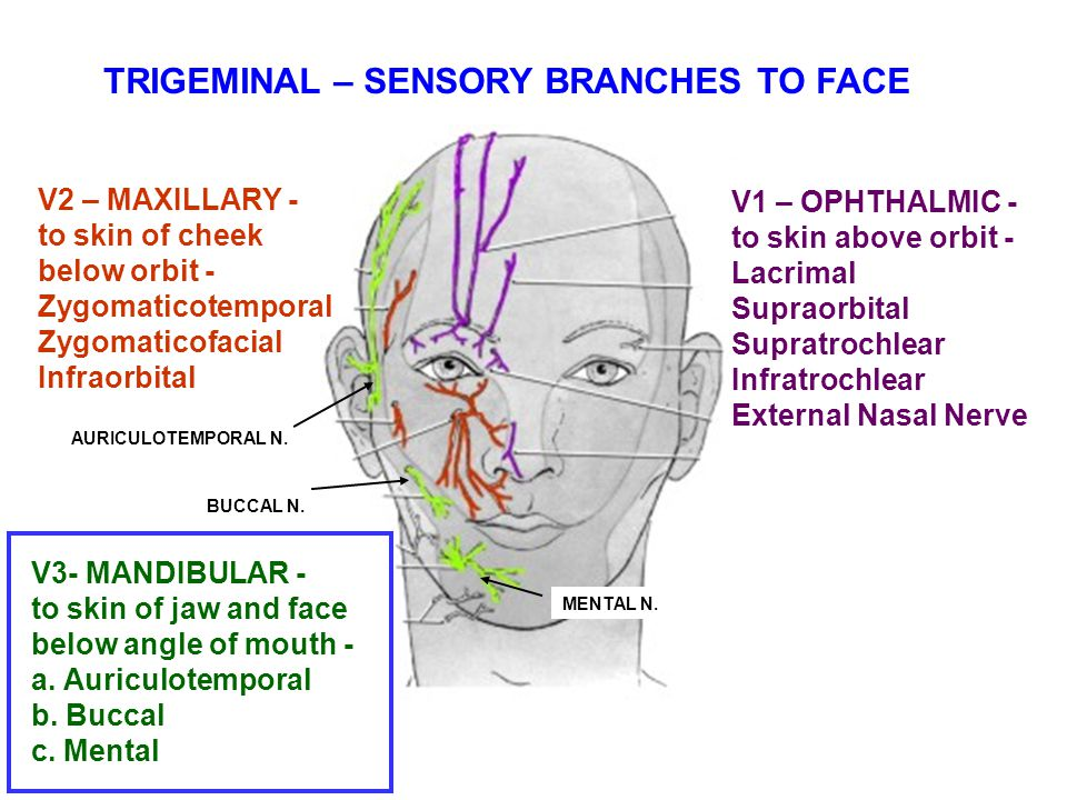 TRIGEMINAL – SENSORY BRANCHES TO FACE
