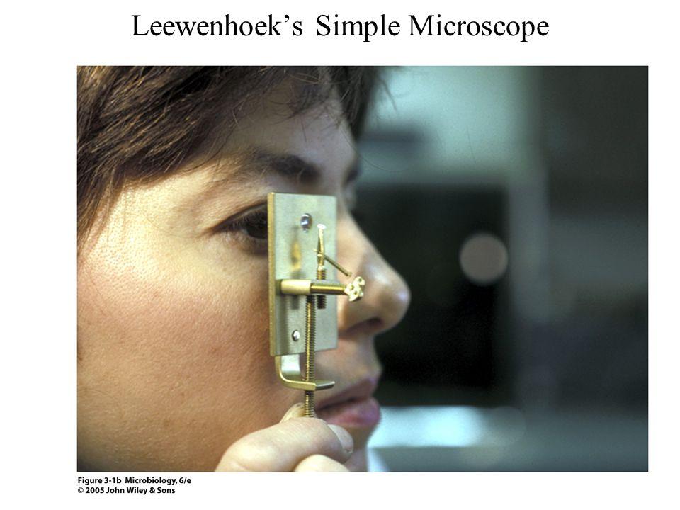 Leewenhoek's Simple Microscope