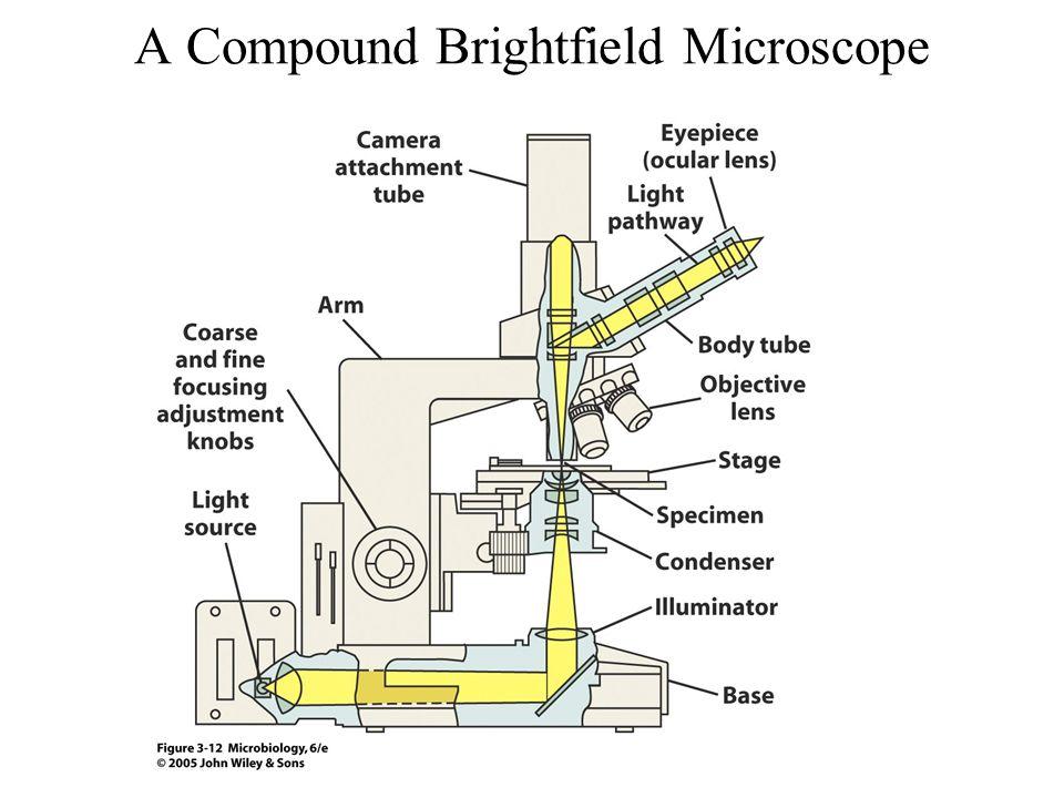 A Compound Brightfield Microscope