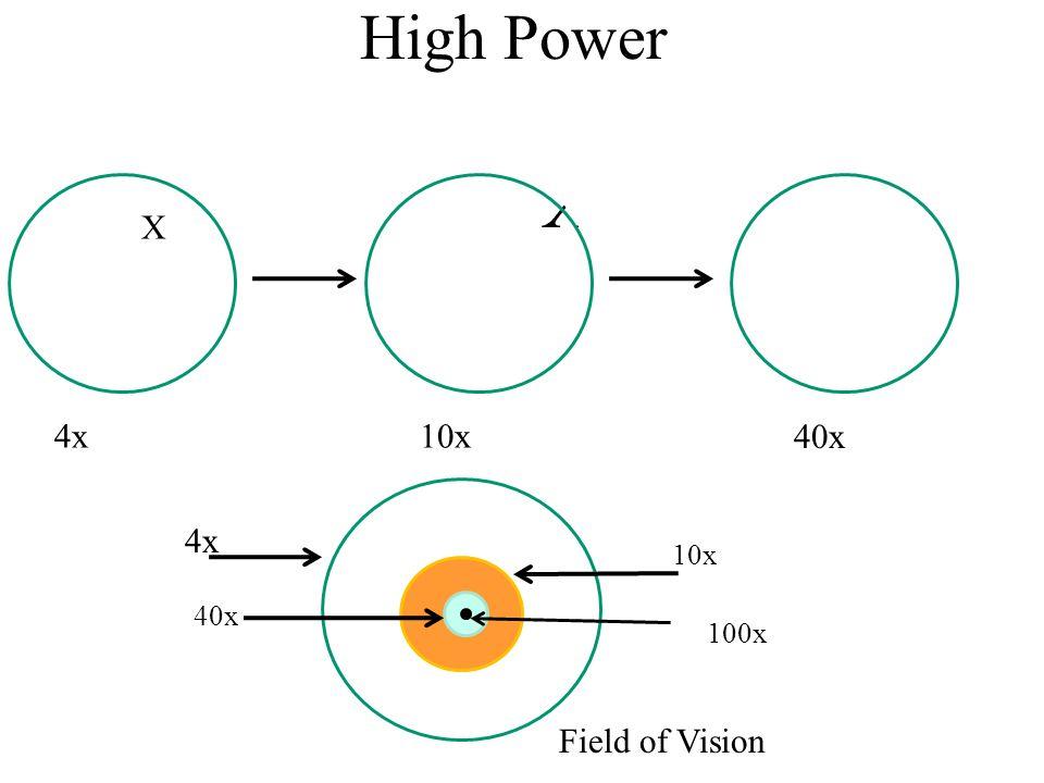 High Power X X 4x 10x 40x 4x 10x 40x 100x Field of Vision