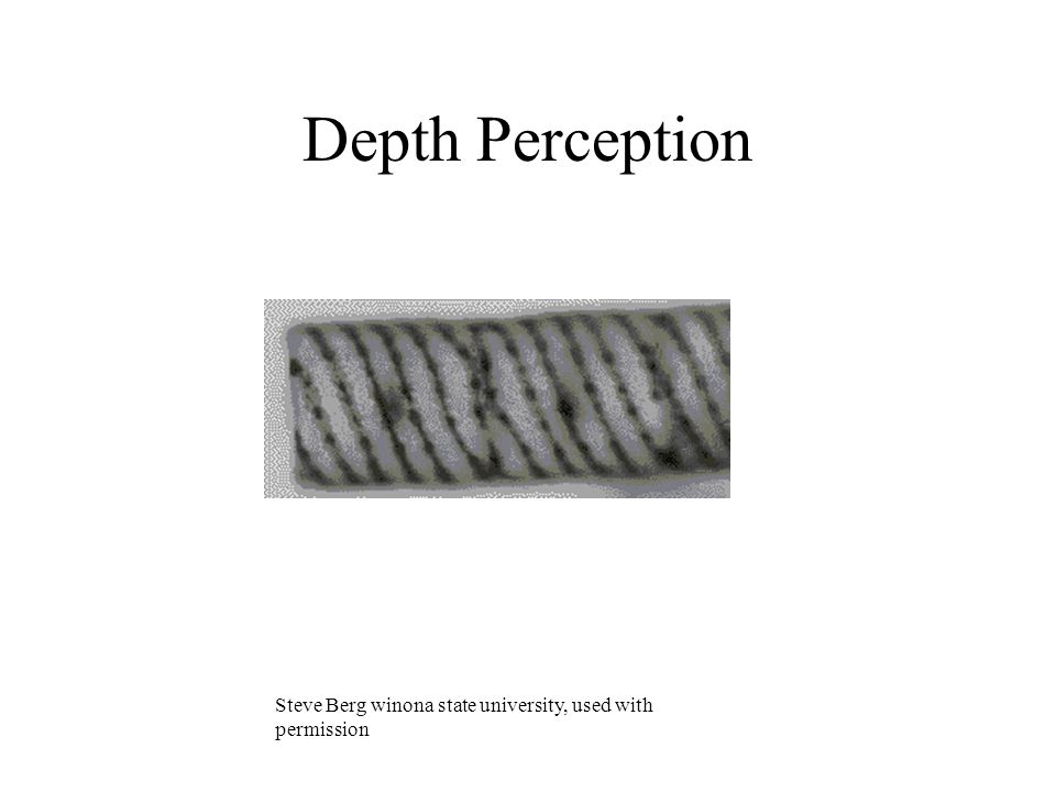 Depth Perception Steve Berg winona state university, used with