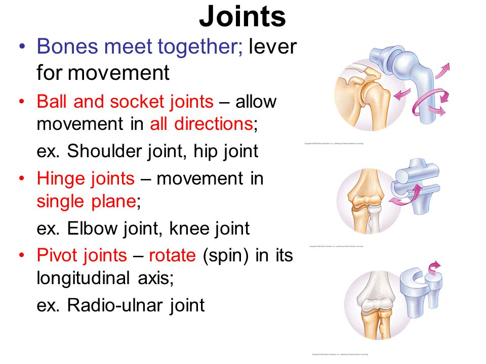 Joints Bones meet together; lever for movement