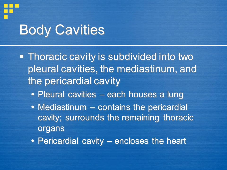 Body Cavities Thoracic cavity is subdivided into two pleural cavities, the mediastinum, and the pericardial cavity.