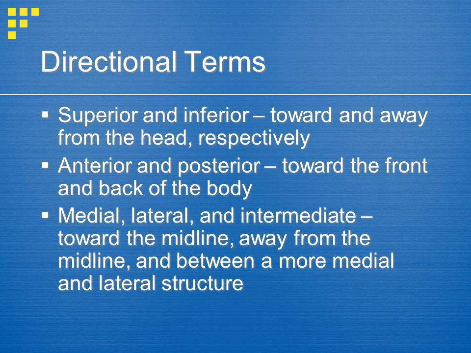 Directional Terms Superior and inferior – toward and away from the head, respectively.