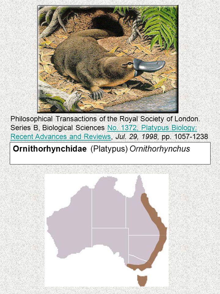 Ornithorhynchidae (Platypus) Ornithorhynchus