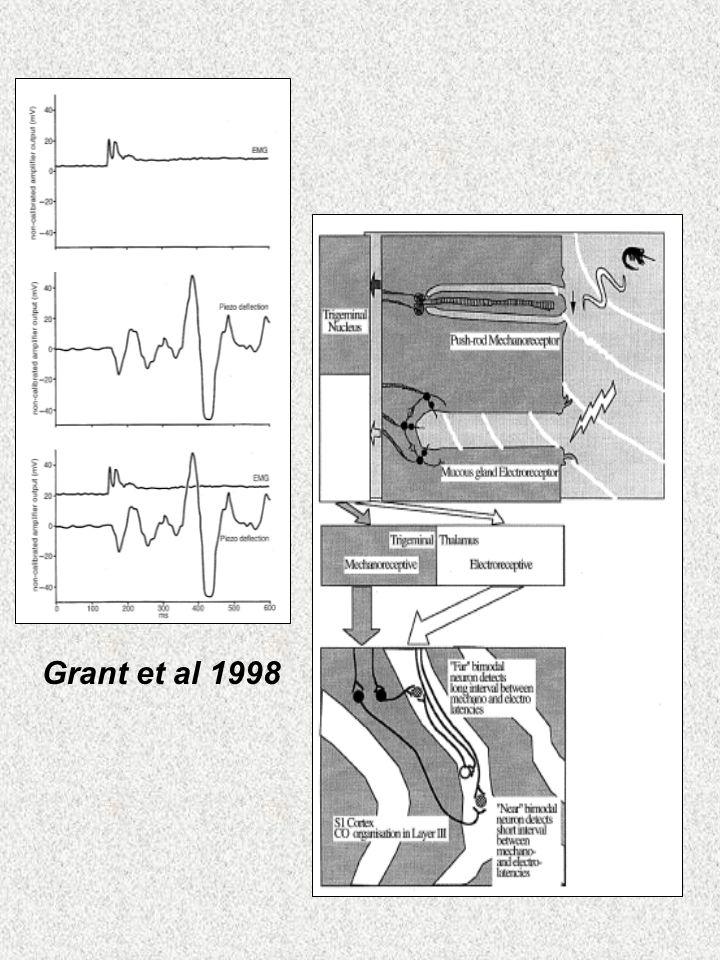 Grant et al 1998