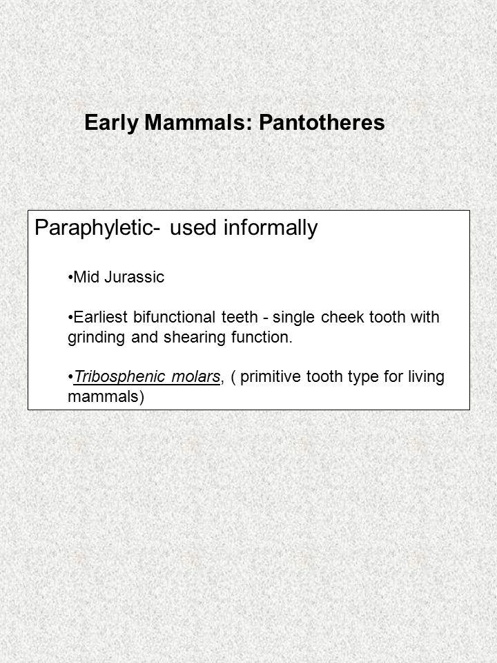 Early Mammals: Pantotheres