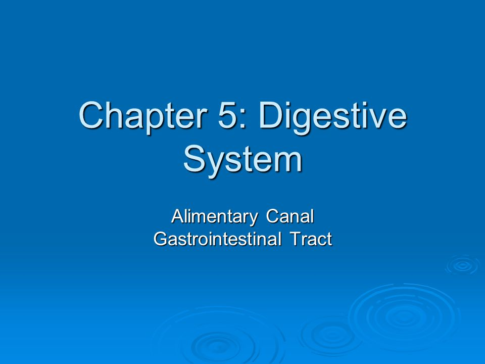 Chapter 5: Digestive System