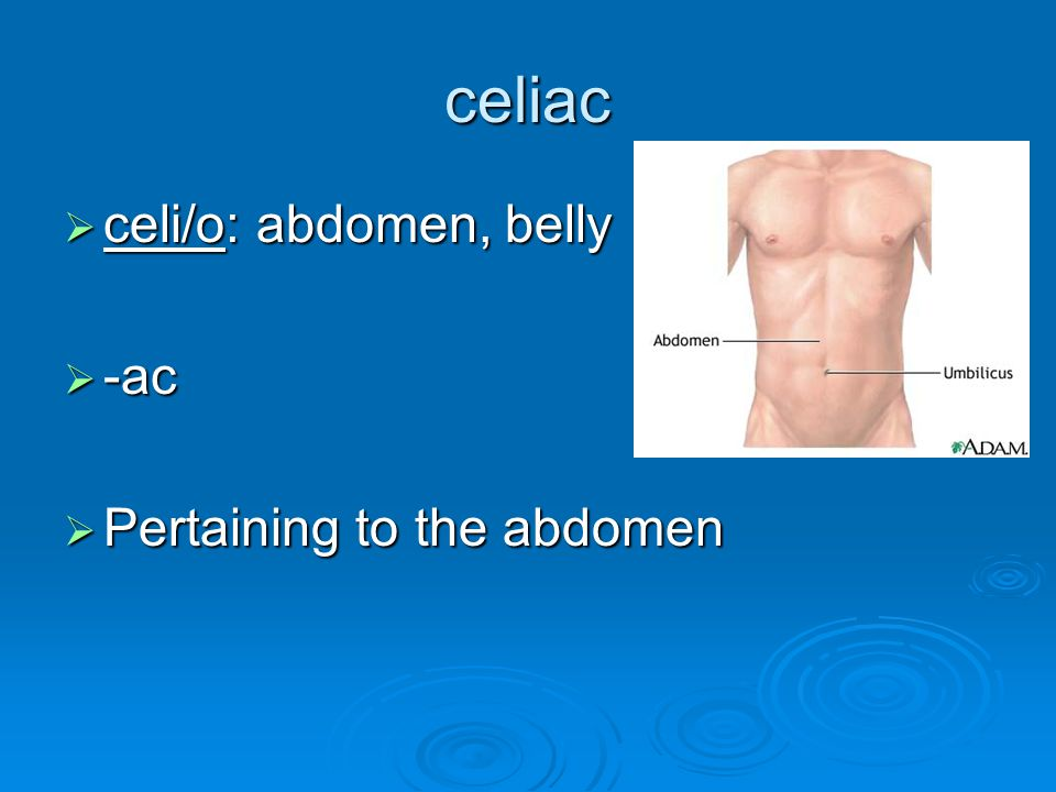 celiac celi/o: abdomen, belly -ac Pertaining to the abdomen