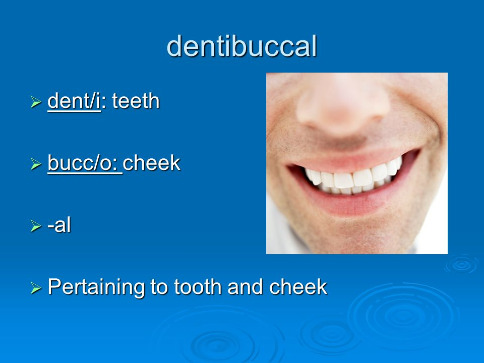 dentibuccal dent/i: teeth bucc/o: cheek -al