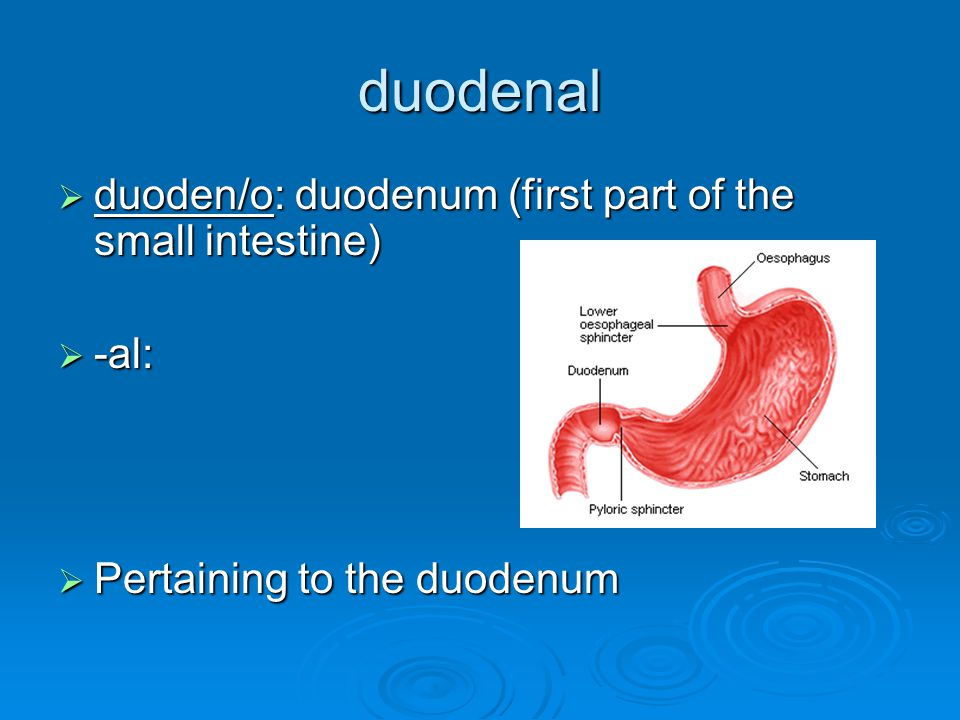 duodenal duoden/o: duodenum (first part of the small intestine) -al:
