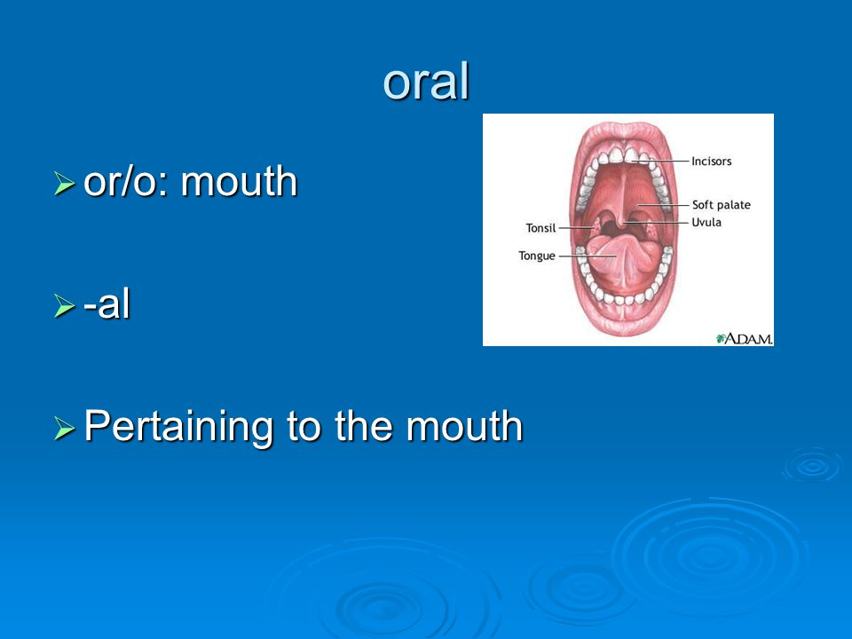 oral or/o: mouth -al Pertaining to the mouth