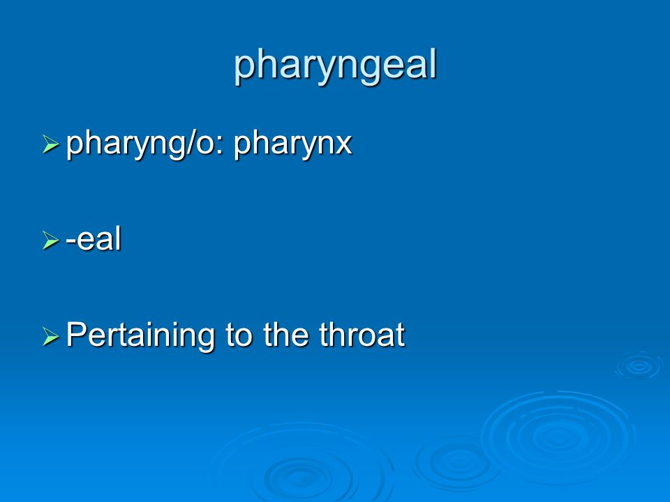 pharyngeal pharyng/o: pharynx -eal Pertaining to the throat