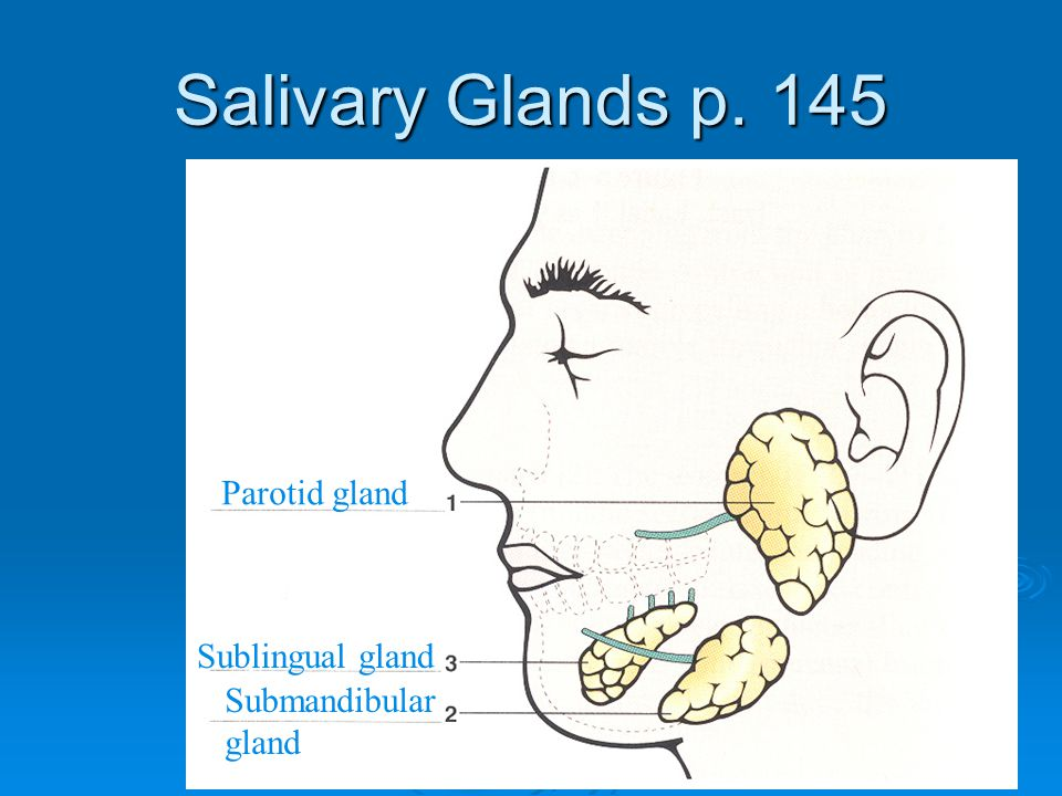 Salivary Glands p. 145 Parotid gland Sublingual gland Submandibular