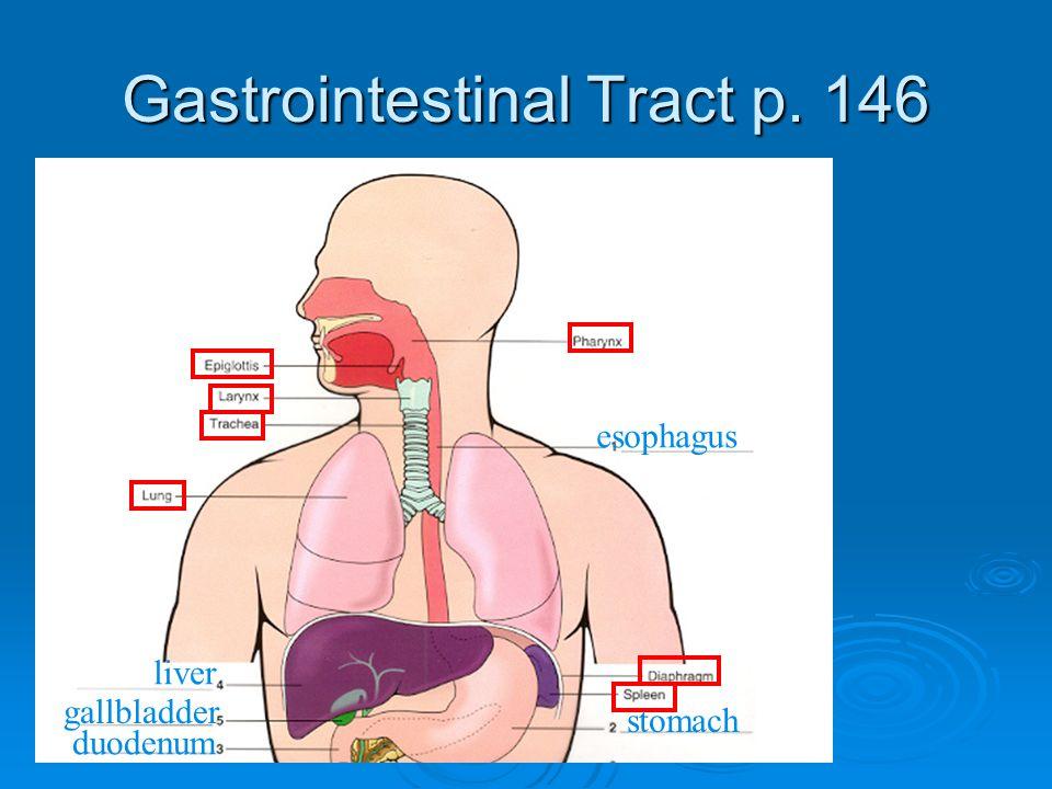 Gastrointestinal Tract p. 146