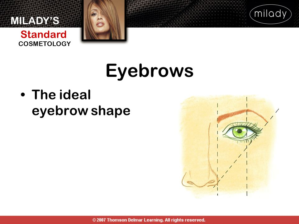 Eyebrows The ideal eyebrow shape