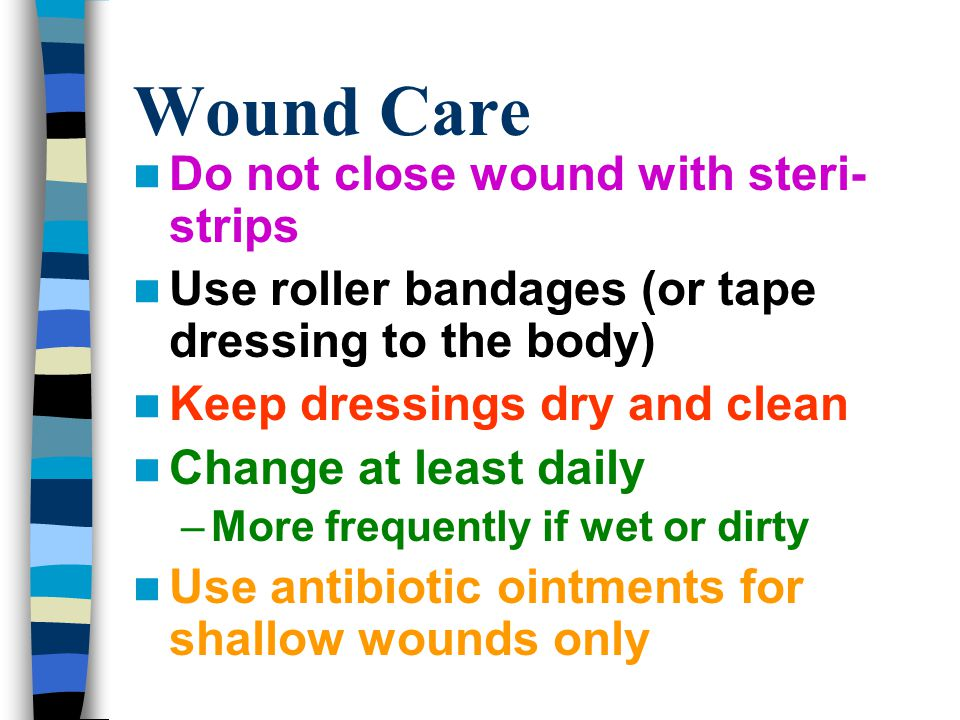 how to keep a dog wound clean