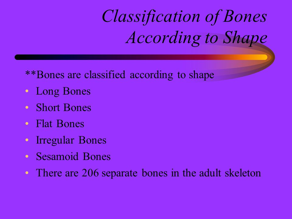 Classification of Bones According to Shape
