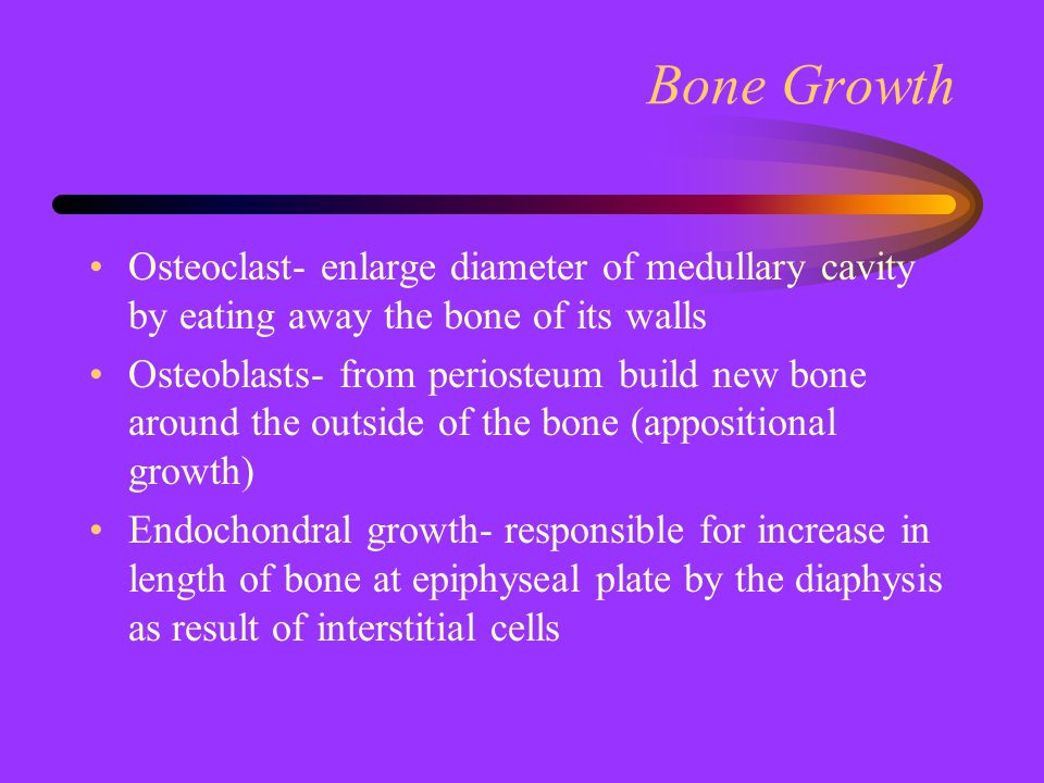 Bone Growth Osteoclast- enlarge diameter of medullary cavity by eating away the bone of its walls.