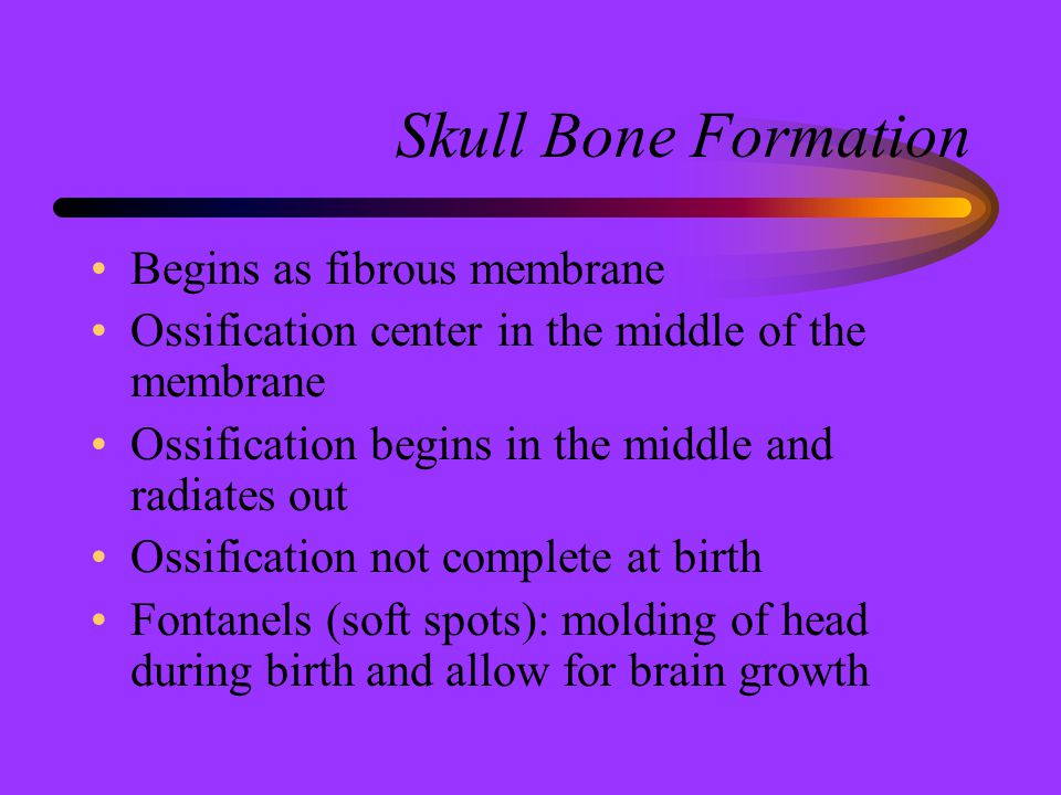 Skull Bone Formation Begins as fibrous membrane