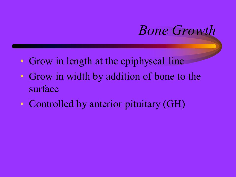 Bone Growth Grow in length at the epiphyseal line