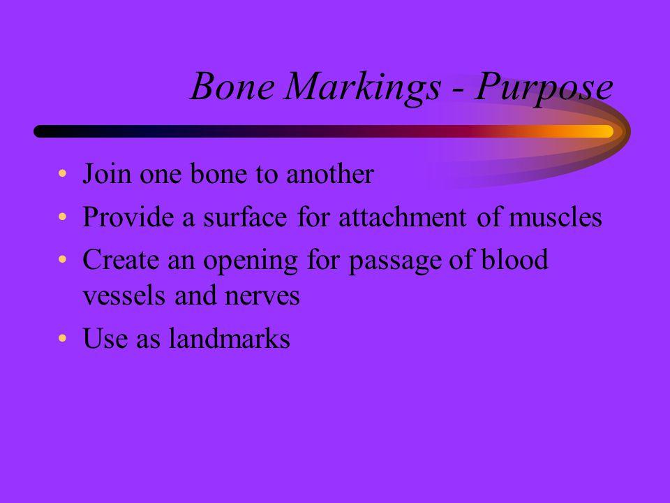 Bone Markings - Purpose