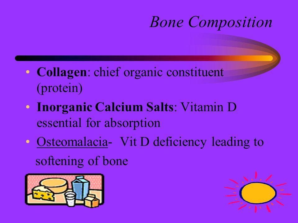 Bone Composition Collagen: chief organic constituent (protein)