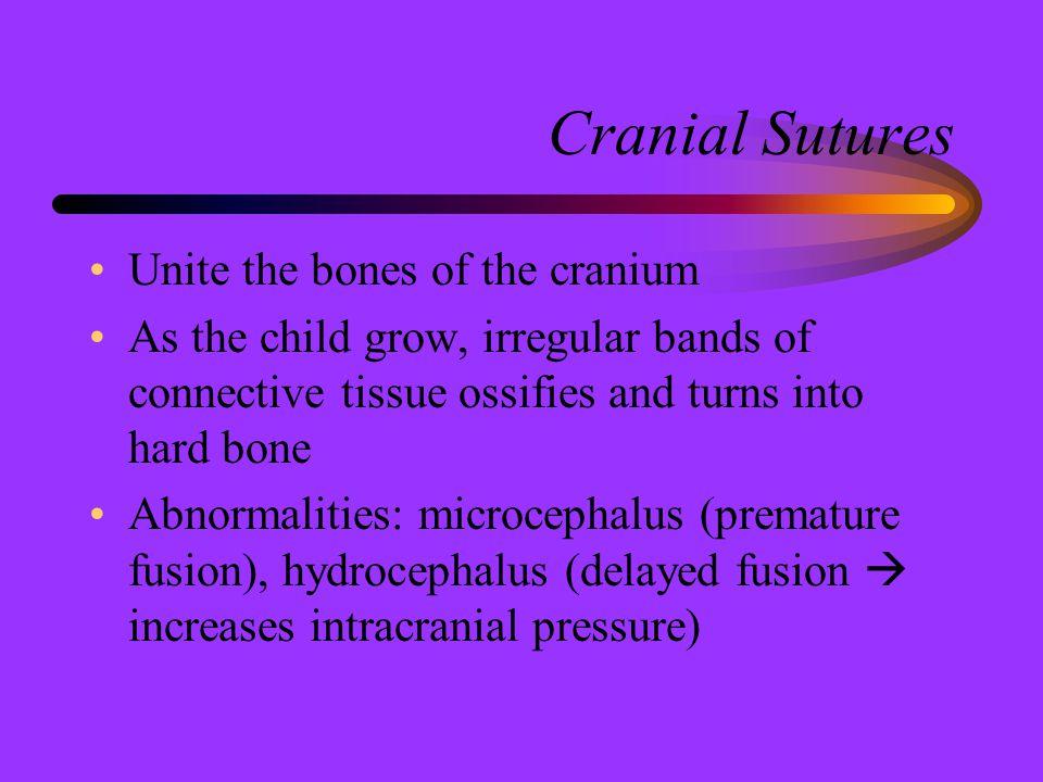 Cranial Sutures Unite the bones of the cranium