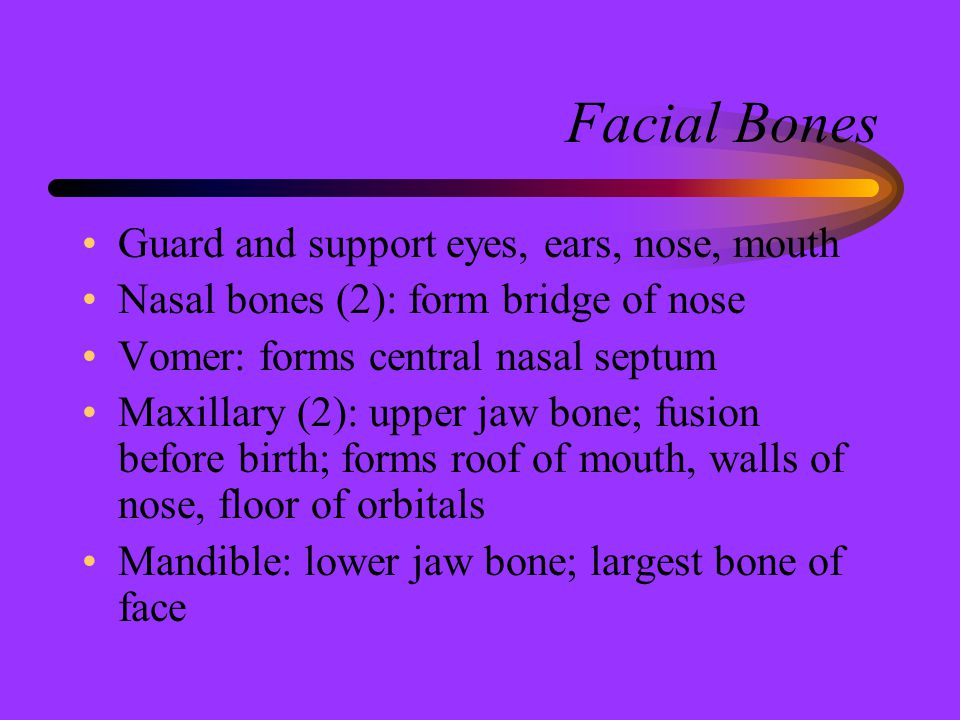 Facial Bones Guard and support eyes, ears, nose, mouth