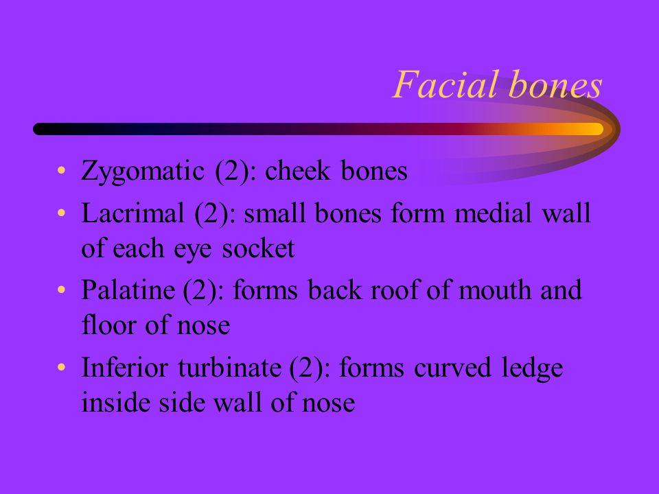 Facial bones Zygomatic (2): cheek bones