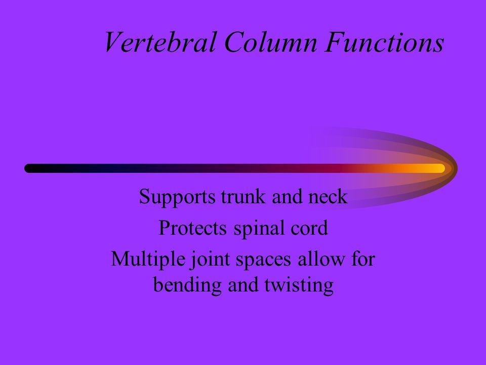 Vertebral Column Functions