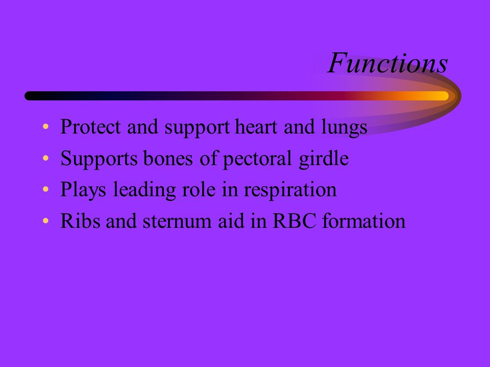 Functions Protect and support heart and lungs