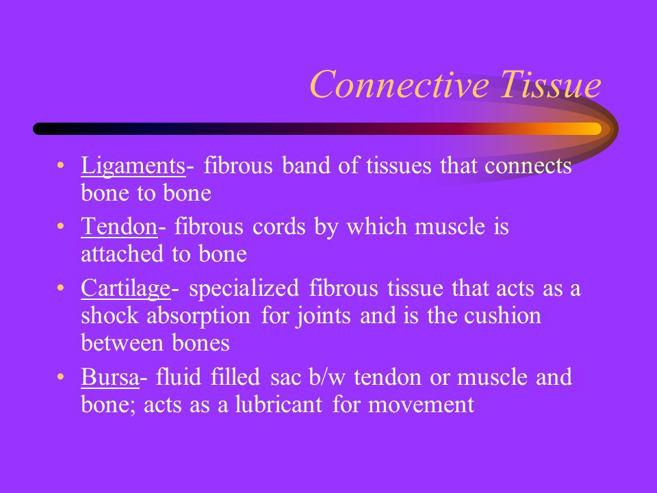 Connective Tissue Ligaments- fibrous band of tissues that connects bone to bone. Tendon- fibrous cords by which muscle is attached to bone.