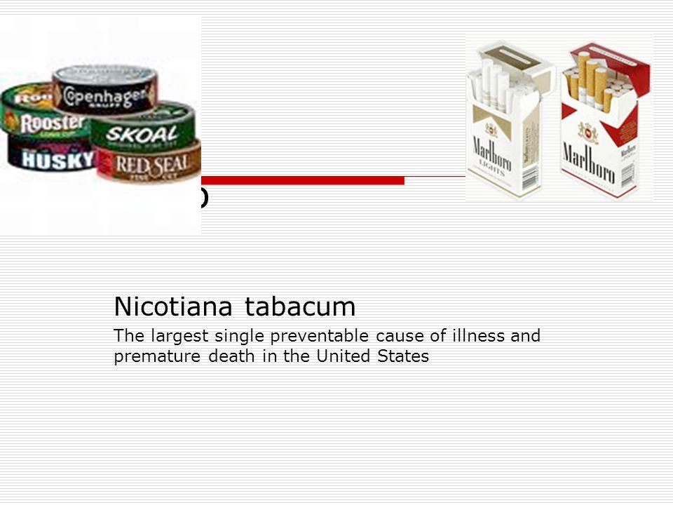 Tobacco Nicotiana tabacum