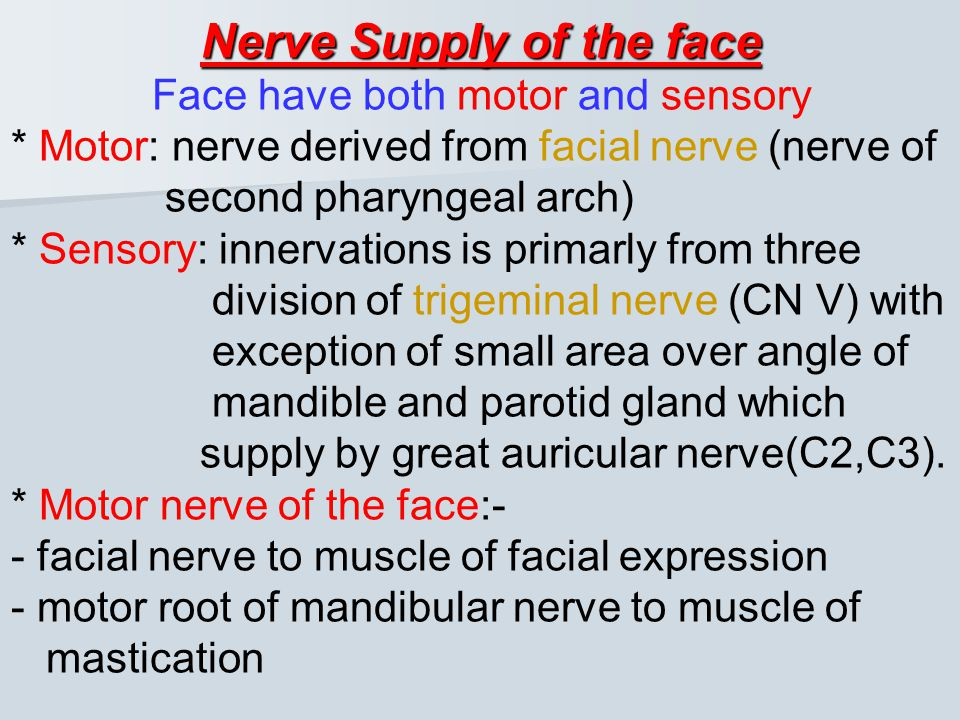 Nerve Supply of the face