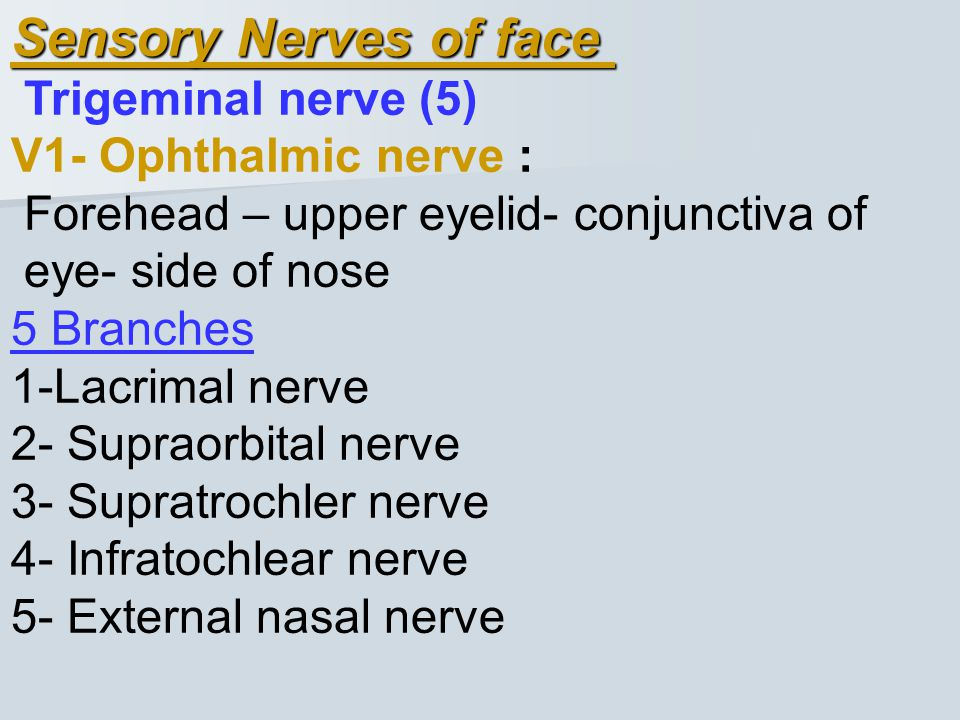 Sensory Nerves of face Trigeminal nerve (5) V1- Ophthalmic nerve :